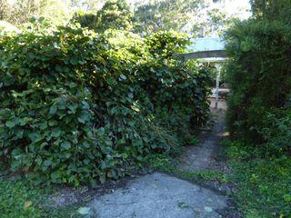 キウイの木に被われそうな家.jpg