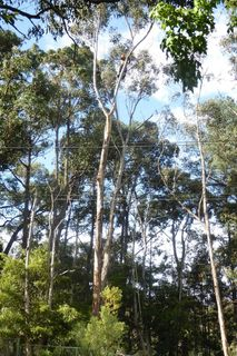 木を伐る.jpg